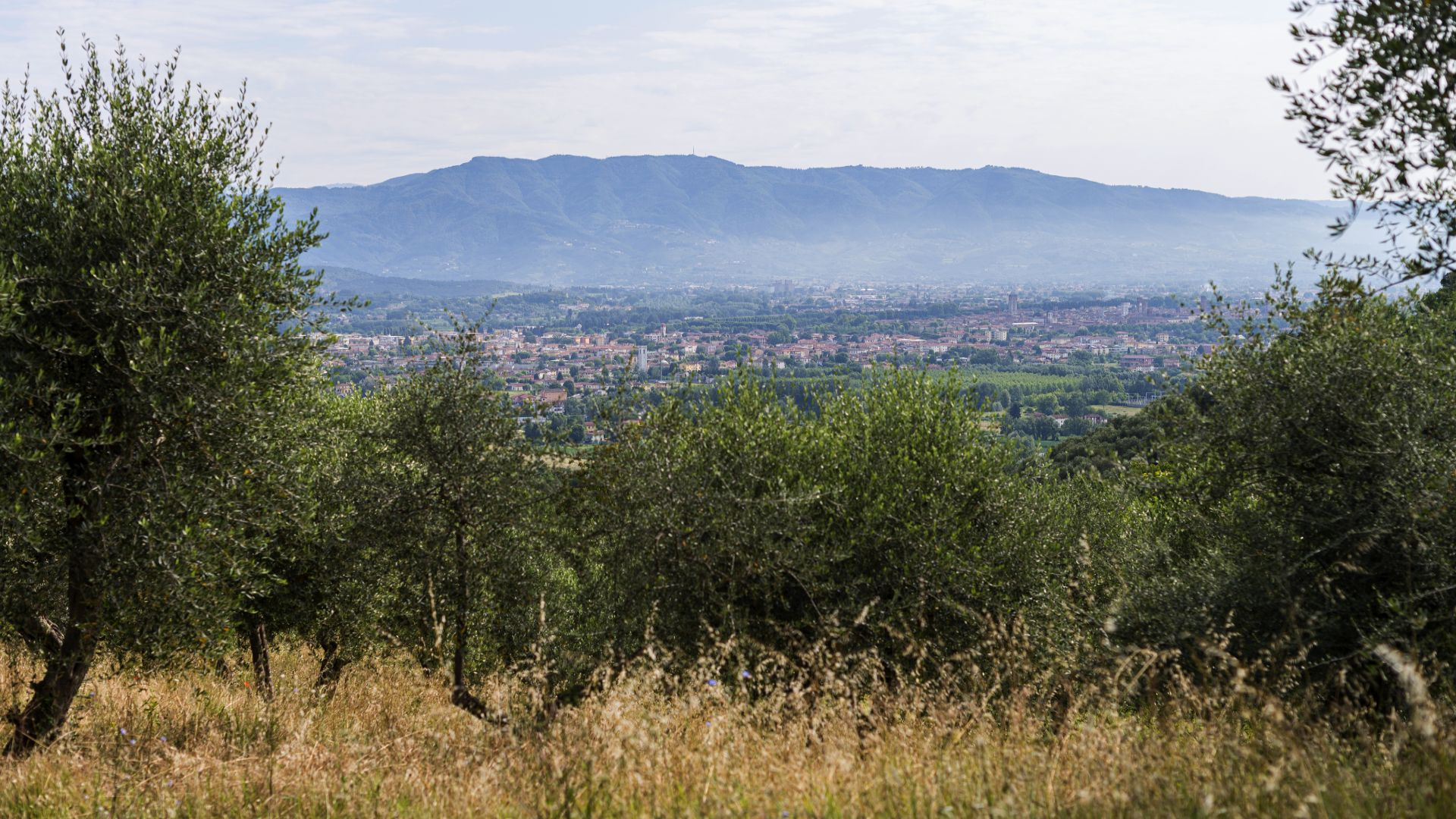 panorama of the plain of Lucca from the Pizzorne plateau