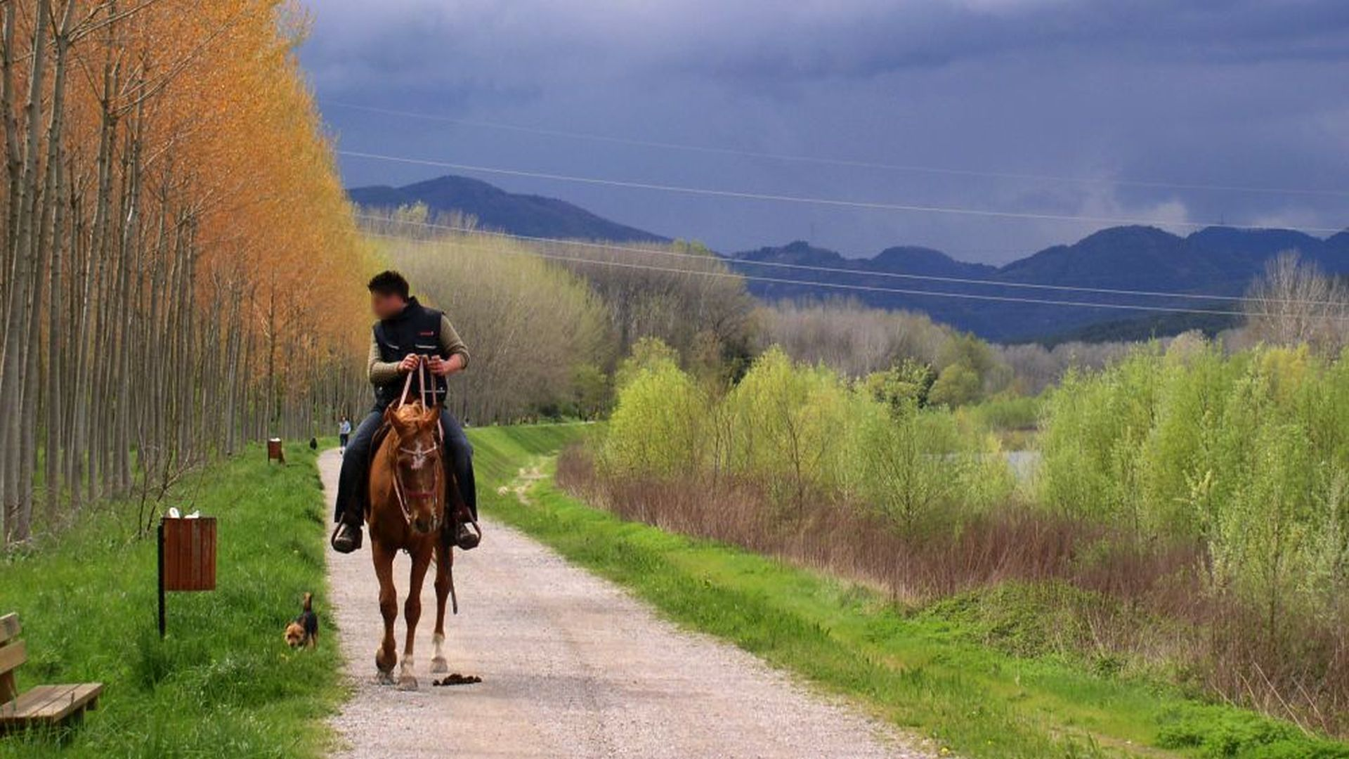 horse riding along the path f the park in spring