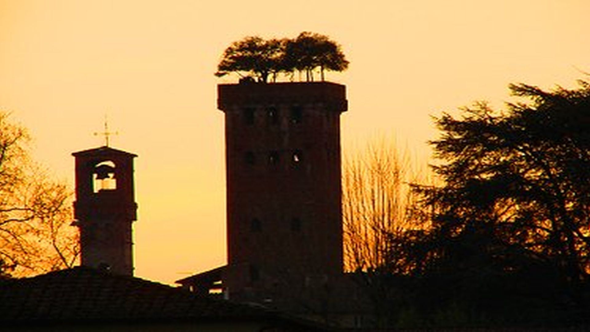 profiles of the guinigi tower and the hours in lucca