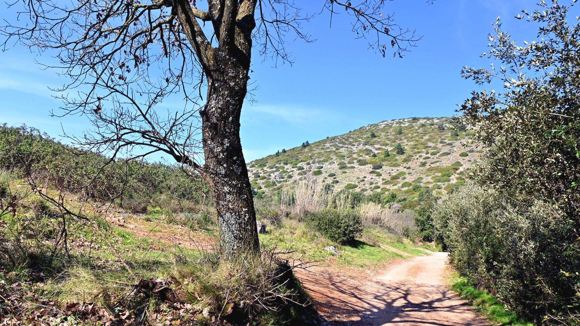 Sentiero sul monte pisano al passo di dante